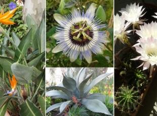 2-b-7-Bon-Abri-fleurs